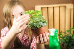 A girl is holding a pot with a flower. a girl in a plaid shirt in her hands a ground with heather ivy. Transplanting potted plants stock image