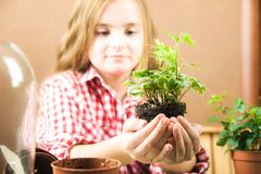 A girl is holding a pot with a flower. a girl in a plaid shirt in her hands a ground with heather ivy. Transplanting potted plants stock images