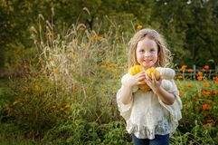 Girl holding pumpkins Stock Image