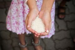 Girl holding rice Stock Photography