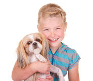 Girl holding a shih tzu dog. Girl holding her pet dog shih tzu isolated on white royalty free stock photo