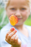 Girl holding and showing leaf royalty free stock image