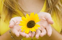 Girl holding a Sunflower. Royalty Free Stock Image