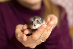 Girl holding a tinyl hamster Royalty Free Stock Image