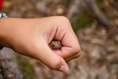 Girl holding a toad in her fist with a blurred background royalty free stock photography