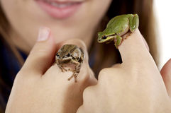 Girl holding two Oregon tree frogs up close. Girl holding two tiny Oregon tree frogs, one brown Royalty Free Stock Image