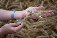 The girl is holding wheat ears in her hand Royalty Free Stock Photo