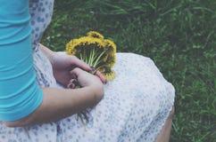 Girl holding yellow dandelions in her hands Stock Photos