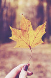 Girl holding yellow maple leaf in her hand, fall background Stock Images