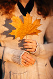 Girl holds autumn leaves on the background of forest Royalty Free Stock Images