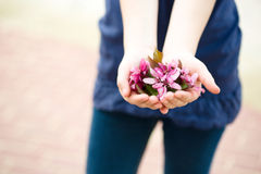 The girl holds beautiful flowers in hands Royalty Free Stock Images