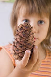 The girl holds the cedar cone Royalty Free Stock Images
