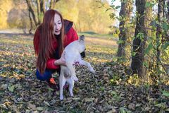 A girl holds a dog in a meadow covered with leaves in autumn royalty free stock photos