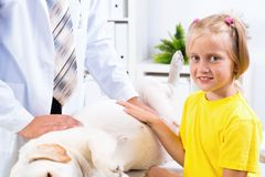Girl holds a dog in a veterinary clinic Royalty Free Stock Photography