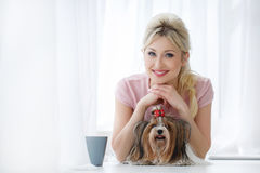 Girl holds on hands Yorkshire Terrier. Royalty Free Stock Photo