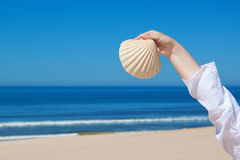 A girl holds a large seashell. stock photo