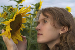 A girl holds and sees a sunflower at sunset Stock Photography