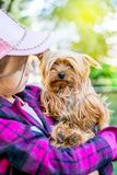 The girl holds a small dog breed Yorkshire Terrier on her hands_. The girl holds a small dog breed Yorkshire Terrier on her hands royalty free stock photo