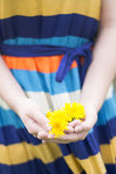 The girl holds yellow dandelions in hand. The girl in a bright dress holds yellow dandelions in hand Stock Images