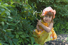 The girl at a honeysuckle bush Stock Image