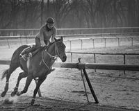 Girl On Horse. A jockey working a thoroughbred race horse Stock Image