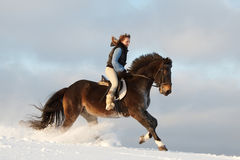 Girl and horse_. Young woman riding Latvian horse breed Royalty Free Stock Photography