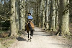 Girl on a horse. Girl is riding on a horse in free nature Stock Photos