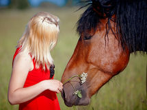 Girl and horse. The girl with a flower and a horse in the field Stock Photo