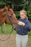 Girl with Horse. Girl taking bridle off her horse after ride royalty free stock images