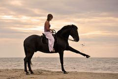 Girl and  horse on the beach Royalty Free Stock Photos