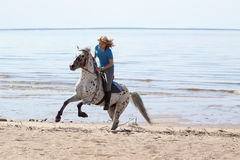 Girl and horse on beach. Beautiful girl riding a spotted horse on beach Royalty Free Stock Photography