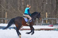 A girl on a horse  jumps  gallops. A girl trains riding a horse in a small paddock. A cloudy winter day.  Royalty Free Stock Images