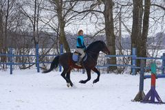 A girl on a horse jumps gallops. A girl trains riding a horse in a small paddock. A cloudy winter day royalty free stock images
