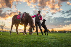 Girl and horse. At sunset stock image