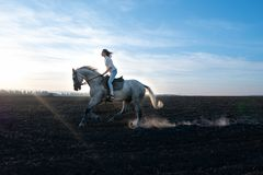 Girl and horse at sunset, jumping over the field stock photos