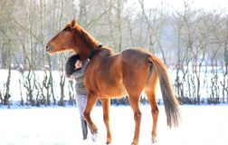 Girl and horse. Young girl hugging her chestnut  horse in a winter field Stock Images