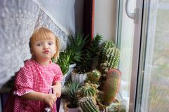The girl of the house at a window with cactuses. The girl of the house in kitchen at a window with cactuses Stock Photos