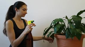 Girl housewife puffin ` on water from a spray bottle onto the lush flower of Spathiphyllum. Care of home plants stock video