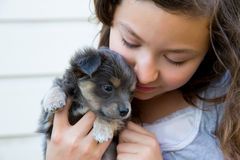 Girl hug a little puppy dog gray hairy chihuahua. Doggy Stock Photo