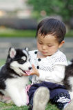Girl hug puppy. A chinese gil play with two puppies Stock Images