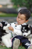 Girl hug puppy. A chinese gil play with two puppies Royalty Free Stock Photography
