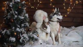 Girl hugging husky dog sitting under the Christmas tree stock video footage