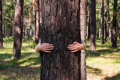 Girl hugging a tree Stock Photography