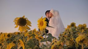 The girl hugs her beloved young man in a beautiful field of sunflowers. she`s wearing a beautiful white dress. stock video footage