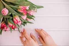 A bouquet of red tulips which a girl hugs her hands on a pink ba Royalty Free Stock Photo