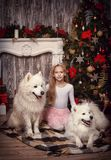 Girl with two white dog Stock Photos