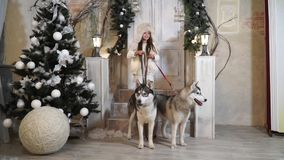 Girl with Husky dogs stands on the threshold near the Christmas tree stock video footage
