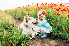 Girl with husky in field stock image