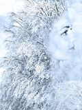Girl in image of the winter. Collage with scene of the portrait of the girl with scene snow tree in image of the winter Stock Photo