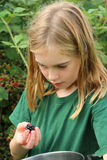 Girl inspecting a blackberry Royalty Free Stock Photo